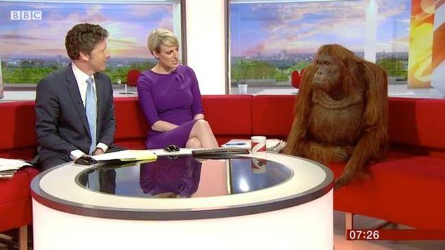 Robot orangután fogadta a reggeli műsor nézőit - videó