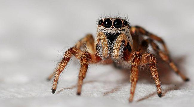 Félelmetesen nagy pók mászkál a CBA-ban - még mindig nincs meg