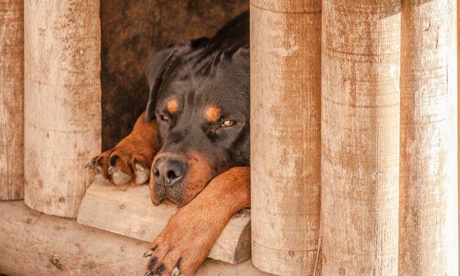 Brutális kutyatámadásban halt meg a 14 hónapos kislány