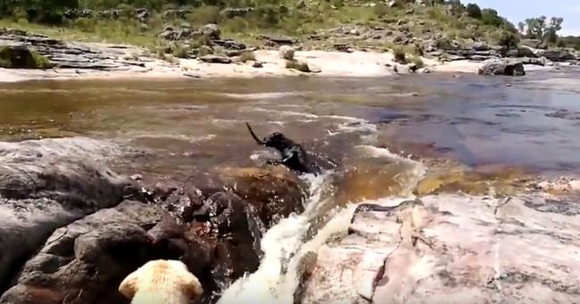 Kutyaszorítóban: egy kutya mentette meg a társát - videó
