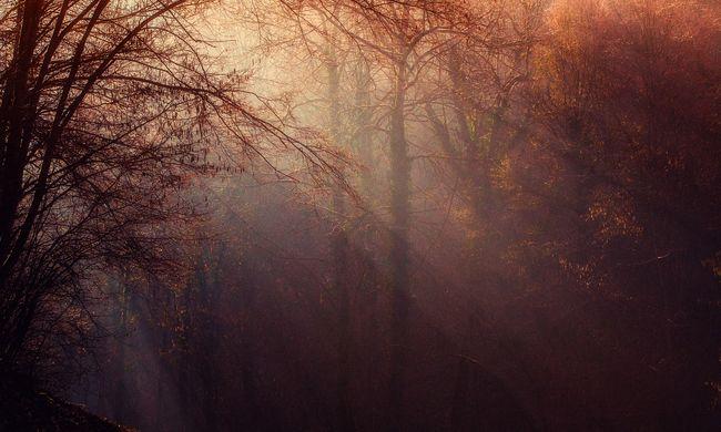 Ez borzalom: egy nő holttestére bukkantak az erdőben