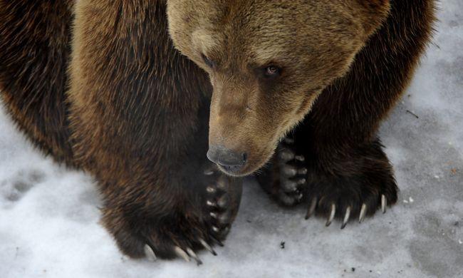Próbált már medvével fürödni? A Velencei-tónál kifejezetten tilos