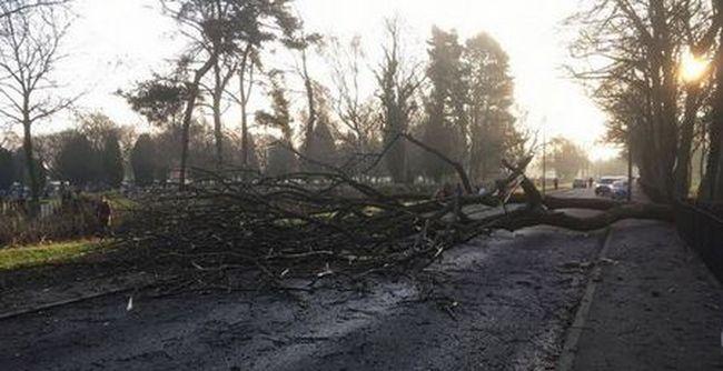 Mentőhelikopter szállt le a fiúért, miután rázúdult egy fa