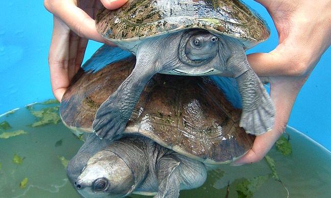 Kínhalált halt különleges állatot sodort partra a Kong-folyó