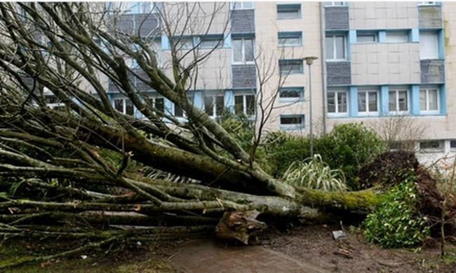 Lecsapott a vihar: kidőlt fák és villanyoszlopok okoztak dugót