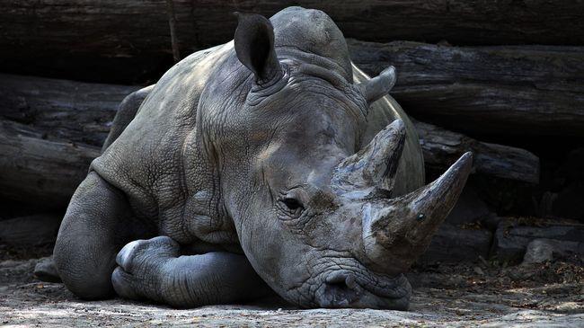 Borzalmas kínokat állnak ki az állatok, hogy élhessenek