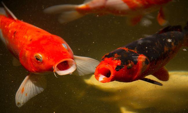 Mókás hangulatában halat dugott a fenekébe, de majdnem belehalt
