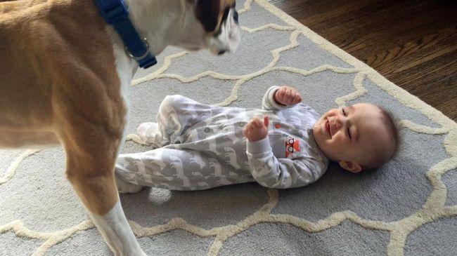Így nevettette meg a vigasztalhatatlanul síró babát a család kutyája - videó