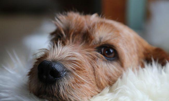 Kutyatulaj miatt halt meg egy motoros Nógrádban, egy hónapig küzdöttek életéért