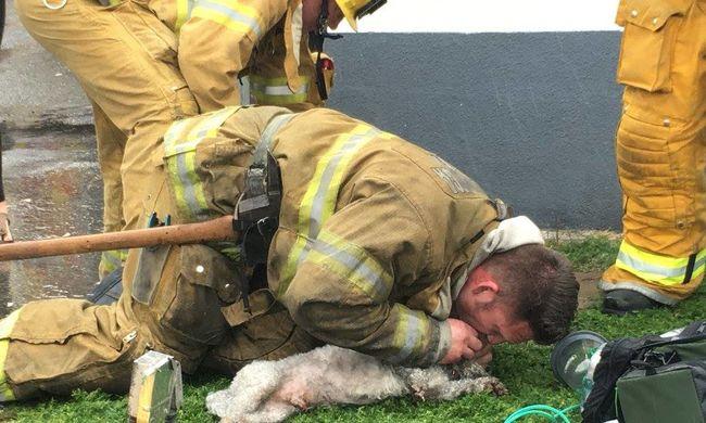 Szájon át lélegeztették az égő házból kimentett kutyát a tűzoltók - az állat megmenekült