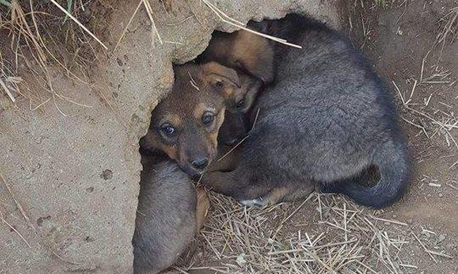 Megható összefogás: tűzoltók mentették meg az éhező kiskutyát Vasszécsenyben