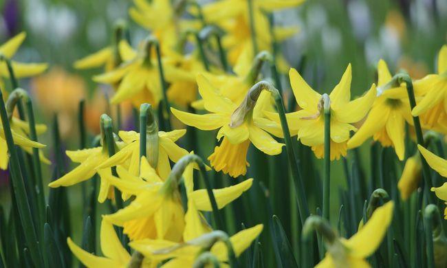 Eladta a falu értékeit a polgármester, még a virágágyásokból is kiszedte a növényeket