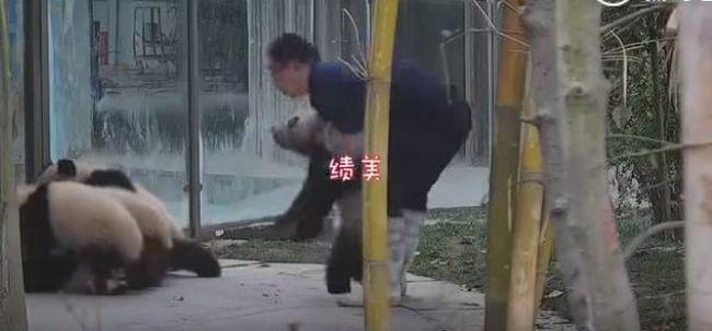 Leteperték gondozójukat, nem szabadulhatott az állatok szorításából - videó
