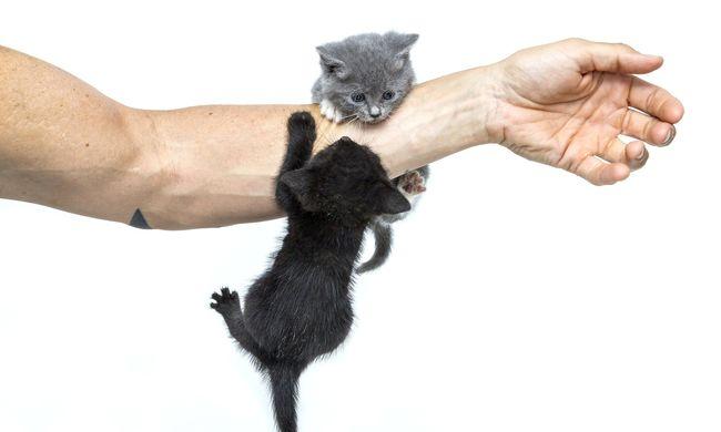 Kedvtelésből kegyetlenül megkínozta a macskát a pécsi férfi