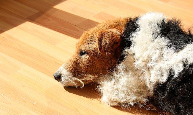 Törvényesen megszégyenítik azokat, akik megeszik a kutyákat