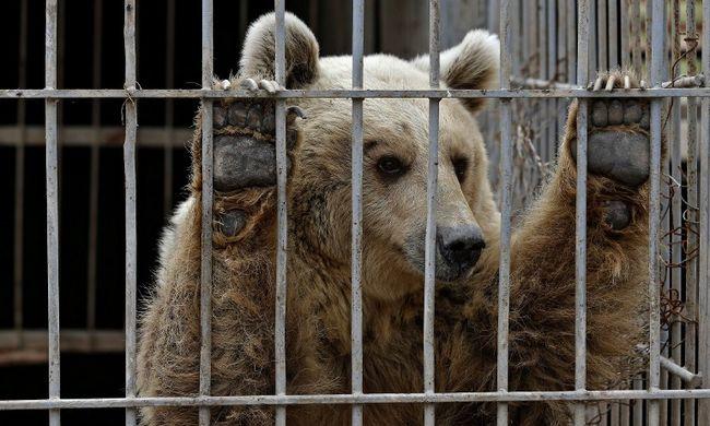 Szívszorító: csak két állat maradt életben a moszuli állatkertben