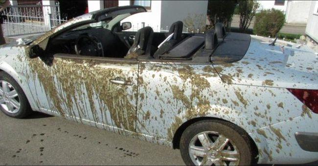 Sütkéreztek az autójukban, amikor folyékony trágya ömlött a nyakukba - a kocsinak annyi