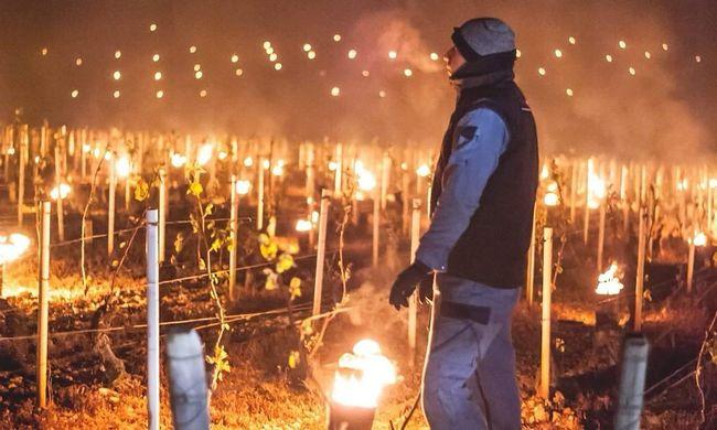 Fűteni kell a szőlőt, különben nem lesz bor: így védekeznek a fagy ellen - videó