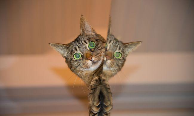 Fura figura lopkodja a macskákat, hogy leborotválja őket, nem tudni mi a célja