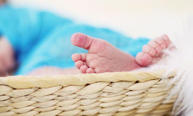 Hangyabolyban találták meg a megfojtott baba holttestét