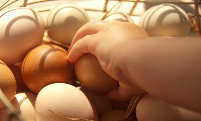 Most közölték: itthon is van szennyezett tojás