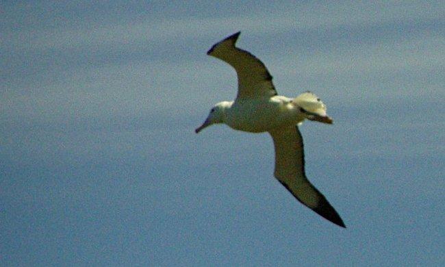 Elérhetetlenek, ezért a világűrből számolják meg a ritka madarakat