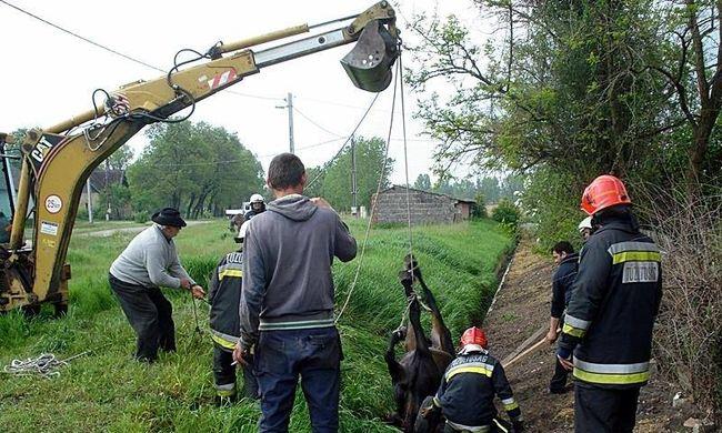 Árokba zuhant egy ló, a tűzoltók mentették meg a kétségbeesett állatot