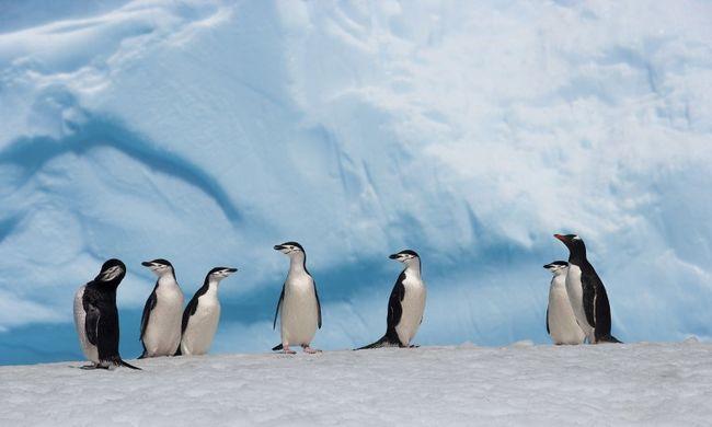 Olyat találtak a kutatók a jégpáncél alatt, amire álmukban sem gondoltak volna