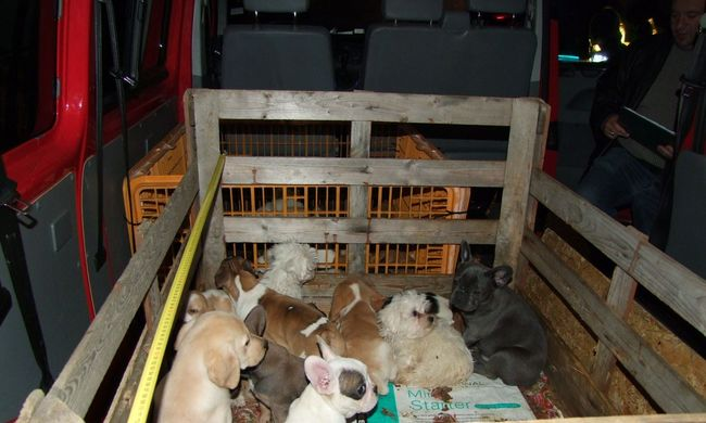 Szomjaztak a kiskutyák, rekeszbe zsúfolta őket az olasz csempész