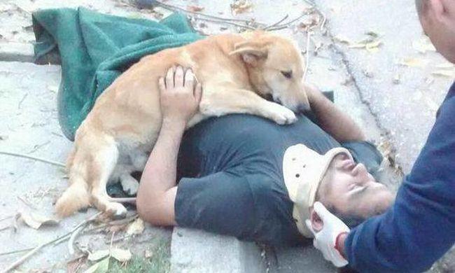 Megható: nem mozdult a kutya sérült gazdája mellől