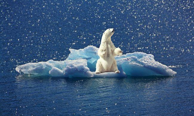 Gyökeresen megváltozik az élővilág, ez az első jelentős lépés az Északi-sarkon
