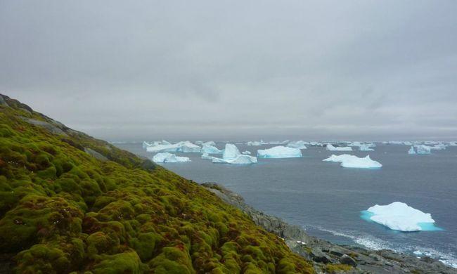 Zöld növények jelentek meg, teljesen megváltozik a jeges táj
