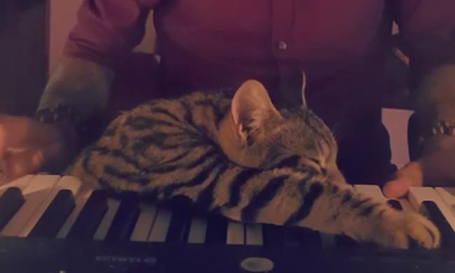 Itt a nap videója: zongoraszótól lágyul meg a cica szíve