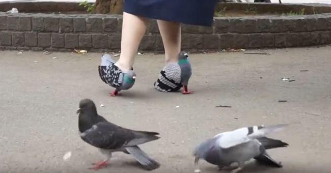 Bizarr cipőt tervezett magának, hogy ne ijessze el az állatokat - videó