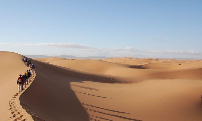 Megmenekült a csodakutya: kizuhant egy repülőből, majd hat napot töltött a sivatagban