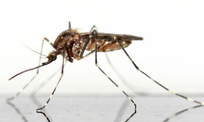 Itt irtják következőleg a szúnyogokat