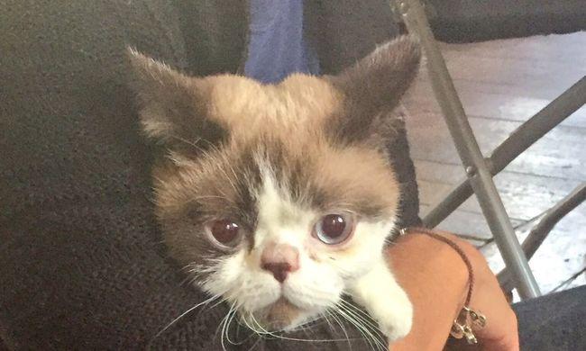 A házi kedvenceket is otthontalanná tette a londoni tűz, de ez a cica különösen szerencsés