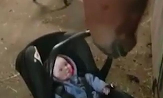 Ennél cukibb ma már nem lesz: ló ringatta el a síró kisbabát