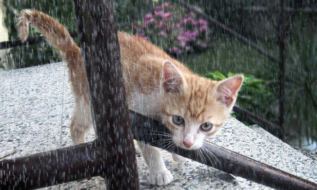 Esővel jön az erős szél, erre számíthat