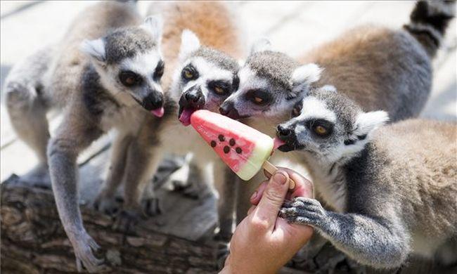 Óriási volt az érdeklődés, jó évet zárnak az állatkertek