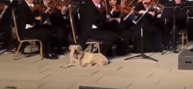 Megmosolyogtató videó: egy kutya lopta el a zenekartól a show-t