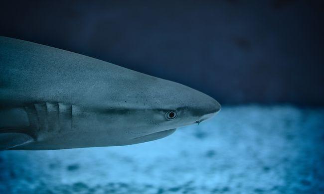 Hátborzongató felvételek: vadászó cápák köröztek a halászok körül