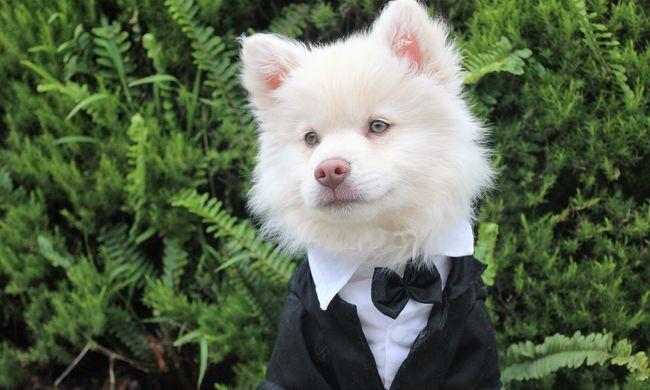 Elkeseredett a pár: megfosztották kutyáikat esküvői szerepüktől