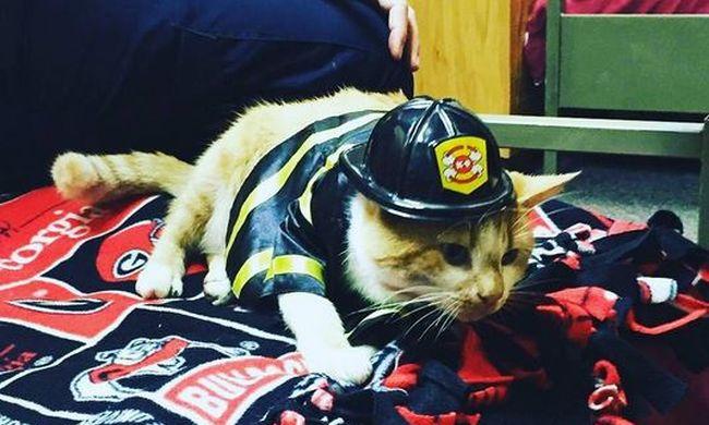 Az életéért küzdött a cica, most fontos munkája van