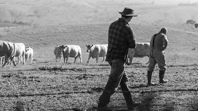 Megvadultak a kirándulóktól a tehenek, kórházba kerültek a turisták