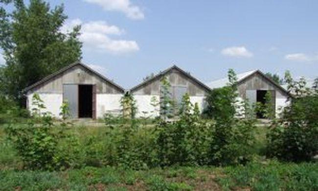 Mákból gyártottak drogot a napszámosok Borsodban