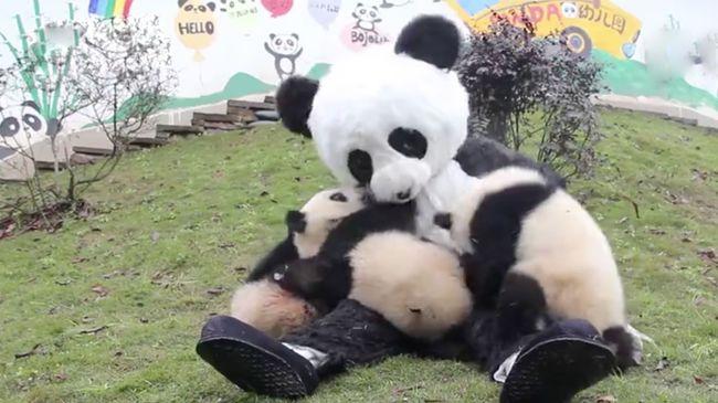 Ennél cukibb ma már nem lesz: jelmezes panda hódította meg a bocsokat - videó