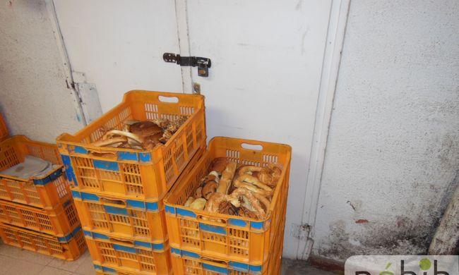 Egerek és gépzsíros zsemlék: undorító pékséget zárattak be Budapesten
