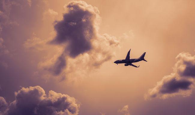 Veszélyes állatot találtak a repülőn: az utasok egy hotelben éjszakáztak