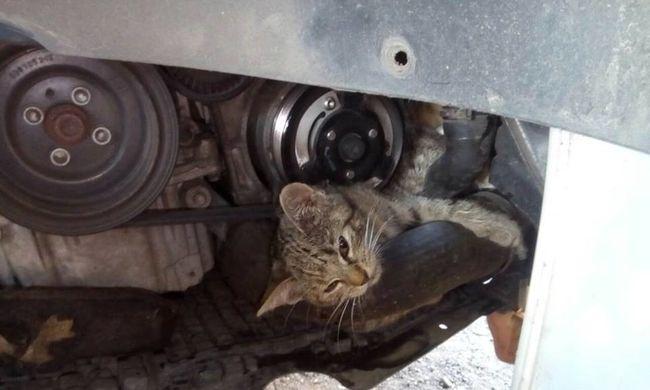 Szívmelengető összefogás: a biztos haláltól mentették meg a cicát Zuglóban
